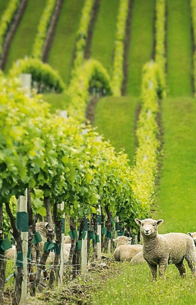カタルジーナ ビオワイン